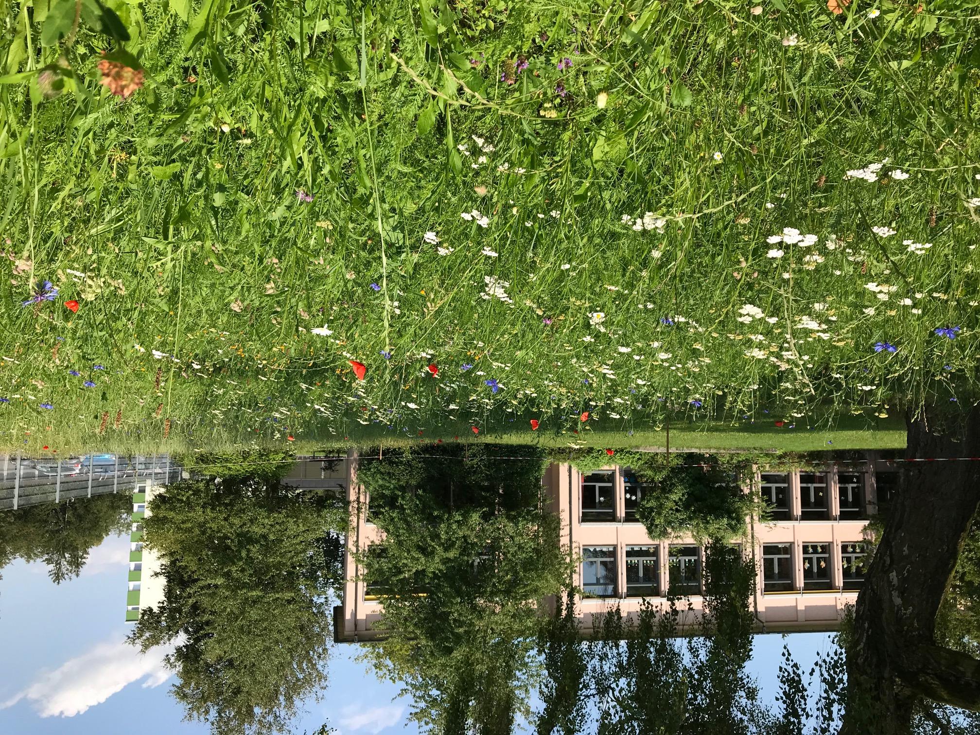 Die Blumenwiese im Naturlernraum blüht