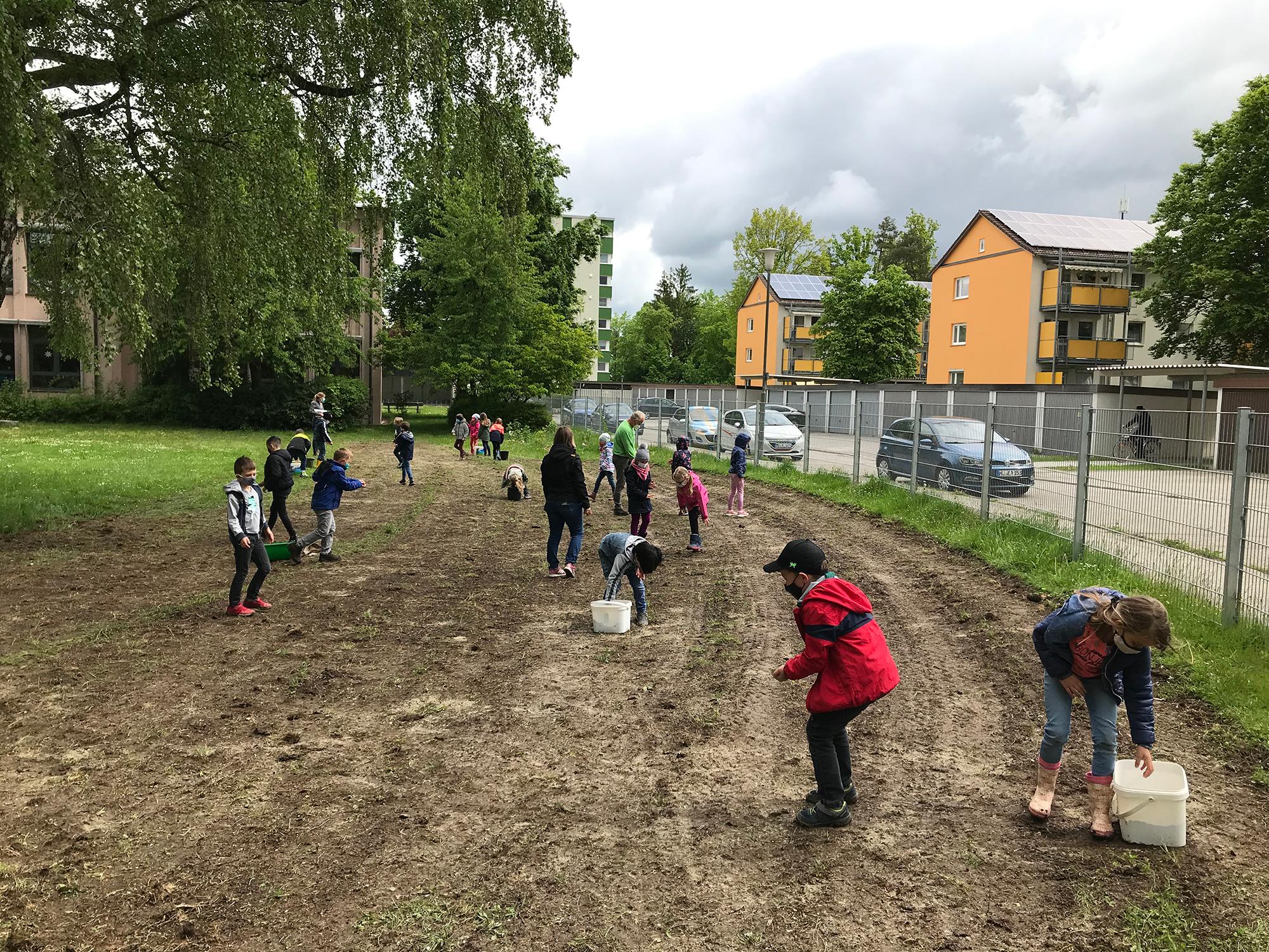 Die Grundschüler säen die Samen für die Blumenwiese